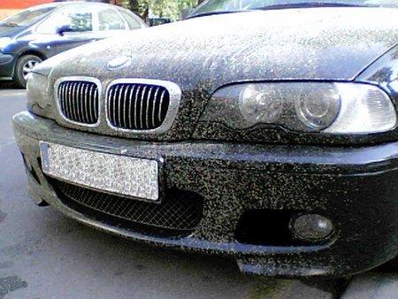¿Cuántos insectos hay en el mundo? ¿Y en España? ¿Y para qué sirven los mosquitos? ¿Cuántos mueren en la carretera?