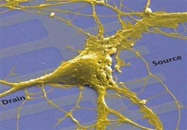 Chip que combina neuronas y electrónica