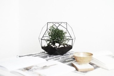 Un terrario de cristal donde poner tus plantas