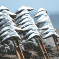 Cocina de la Costa del Sol: los espetos de sardinas