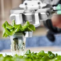Hortalizas cultivadas por robots: la granja robotizada de Iron Ox empieza a dar frutos