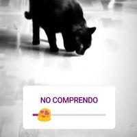 El último grito en Instagram Stories: encuestas a través de emojis deslizables