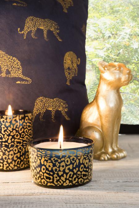 Muymucho Bts Cheetah 2