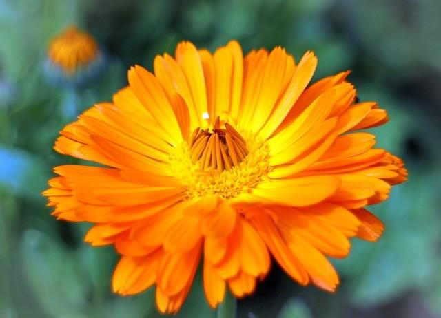 Flower 373853 640
