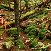 Apple ha comprado dos bosques para hacer sus cajas más ecológicas