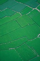 ¿Se trabajaba más antes que ahora? Arrozales chinos VS Agricultura europea