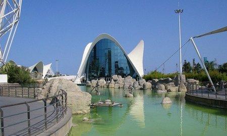 El Oceanogràfic de Valencia celebra con descuentos su noveno aniversario