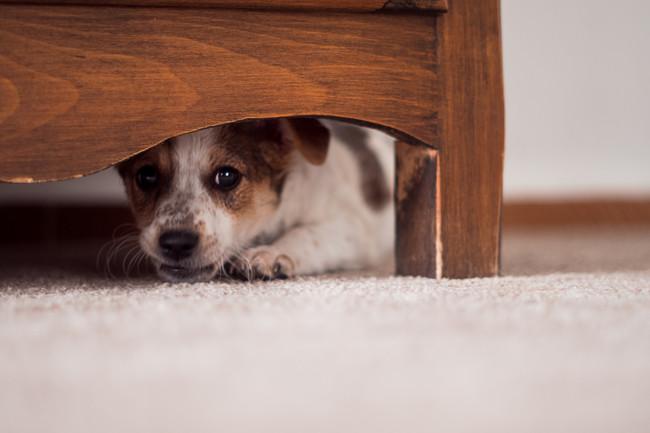 animalito-perrete-miedo