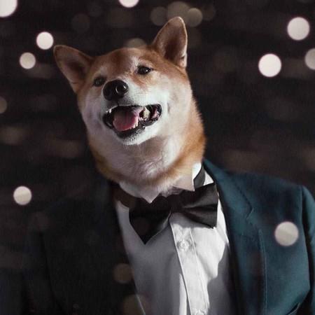 En El Nuevo Ano Chino Dedicado Al Perro Recordamos Los Mejores Looks De Nuestro Favorito Mensweardog 09