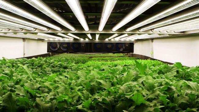 """La caída de precios en LEDs podría revolucionar la agricultura """"de interiores"""""""