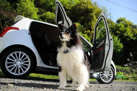 Transportar perros en el coche
