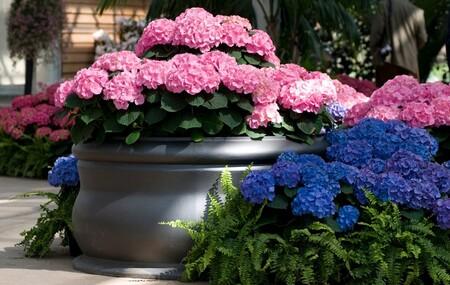 Decorar la terraza con flores