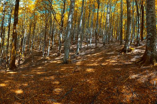 Cómo atrapar los colores del otoño con cuatro técnicas de Adobe