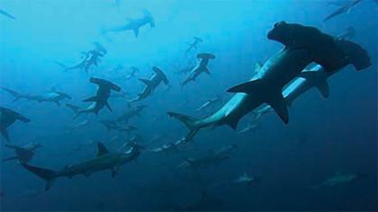 De las profundidades azules a la marcha de los pingüinos