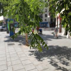 Foto 12 de 45 de la galería pocophone-f1-fotografias en Xataka