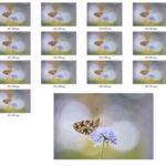 Focus stacking: cómo ampliar la profundidad de campo en fotografía macro (parte II)