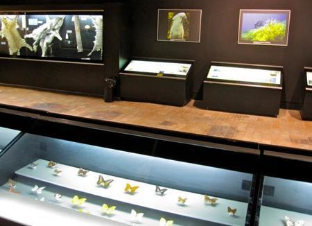Museo biodiversidad Ibi - Alicante
