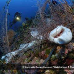 Foto 7 de 34 de la galería underwater-competition en Xataka Foto
