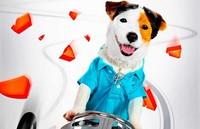 'Pancho, el perro millonario', vergüenza ajena
