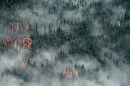 Trucos Consejos Hacer Fotos Niebla Neblina 9