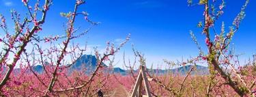 Cuando la naturaleza se convierte en espectáculo: la floración de Cieza, Murcia