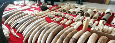 60.000 dólares el kilo: el cuerno del rinoceronte sigue siendo unos de los mercados ilegales más lucrativos