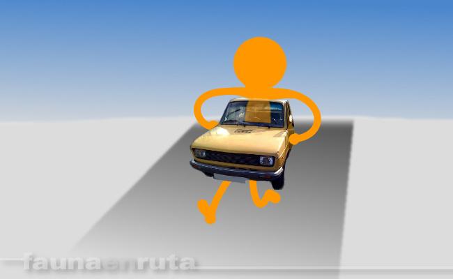 fauna en ruta: mantenimiento del coche