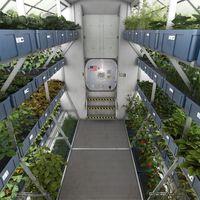 La lechuga cultivada en el espacio es tan buena como la terrestre y esto sí es un paso de gigante para la exploración espacial