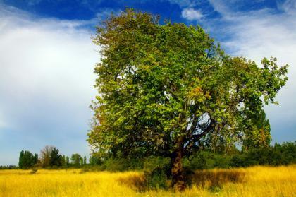 De Chiqui Chiqui a Telma Ortiz: cuando el bosque no deja ver el Árbol