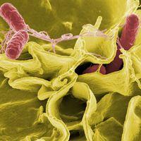 La lista de 12 superbacterias de la OMS no es más que el principio, el fin de los antibióticos está cada vez más cerca