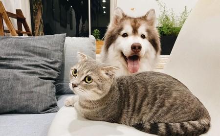 Tener una mascota podría ayudarte a no morir por una enfermedad cardiovascular