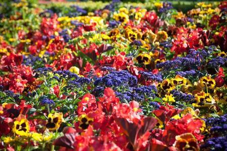 Las mejores recomendaciones para el mantenimiento de tu jardín, ¿cuándo usar abono?
