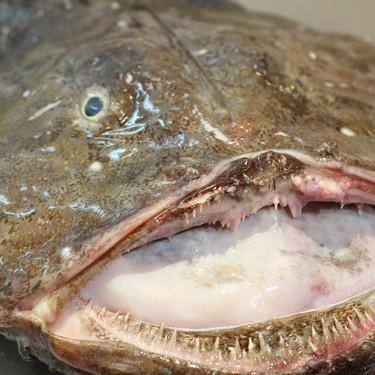 Todo lo necesario para mejorar vuestros platos de pescado