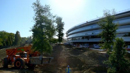 Son tantos los árboles necesarios en el Apple Park, que Apple ha agotado a los proveedores de California