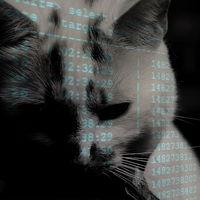 """Un ciberatacante destruye miles de bases de datos MongoDB y Elasticsearch y deja sólo una firma: """"miau"""""""