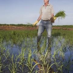 Foto 1 de 14 de la galería la-produccion-de-los-cereales-con-base-de-arroz en Vitónica