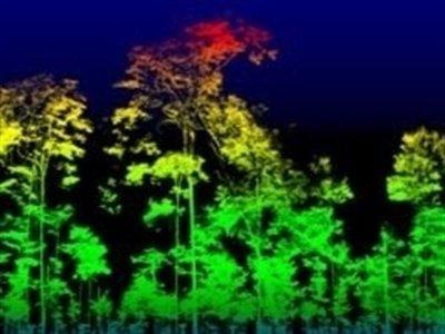 Ya podemos conocer la masa de un árbol con mucha precisión gracias al láser 3D