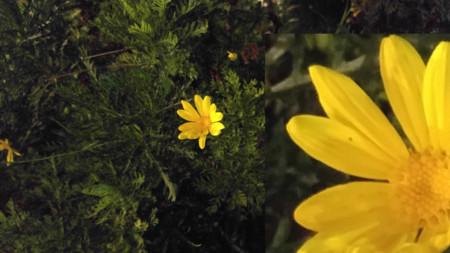 Flor Lg