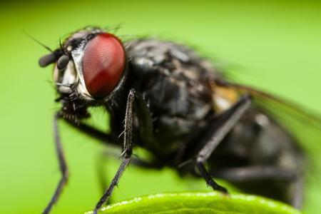 ¿Por qué las moscas se vuelven tan pesadas cuando va a llover?