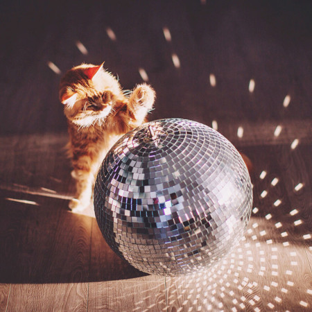 Ginger Cat Photography Kotleta Cutlet Kristina Makeeva Hobopeeba 43