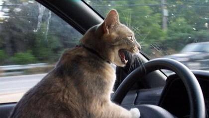 Animales conduciendo