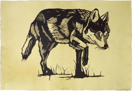 """""""Loboperro"""", los híbridos entre el lobo gris mexicano y el perro doméstico que científicos de la UNAM quieren erradicar"""