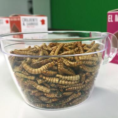 Este gusano es el primer insecto aprobado en Europa como alimento para consumo humano