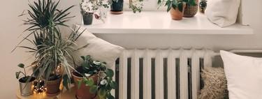 Cinco consejos para que tus plantas sobrevivan a tus vacaciones en verano