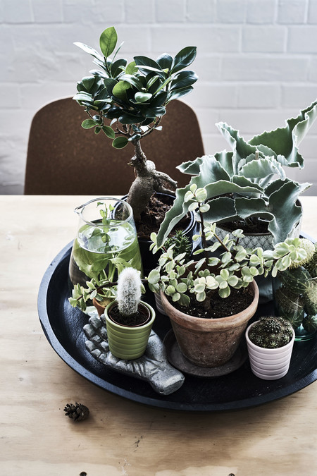 Ikea Plantas Ph149008