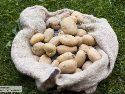 ¿Sabes cómo guardar las patatas correctamente? Te lo contamos