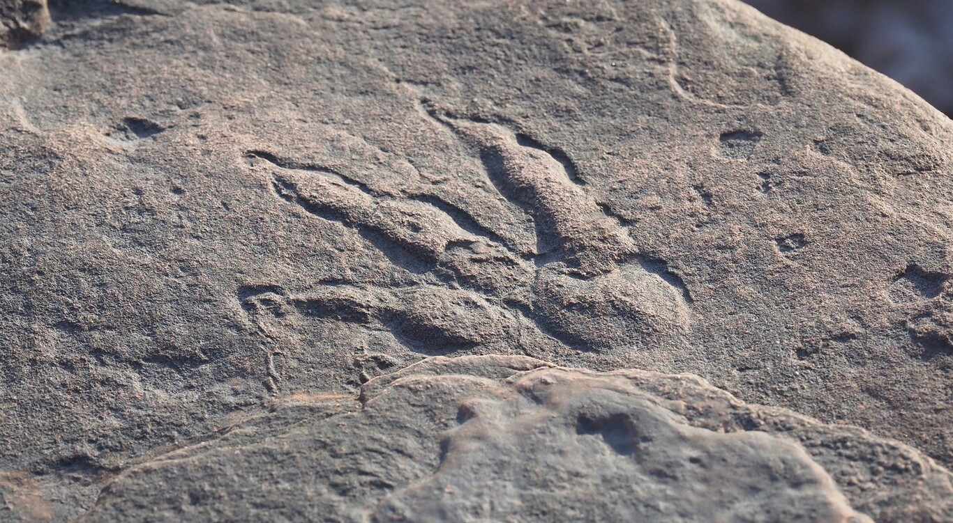 A 4-year-old girl finds a dinosaur footprint in near perfect condition