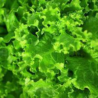 Zumo de naranja y verduras de hojas verdes: menor pérdida de memoria en los hombres