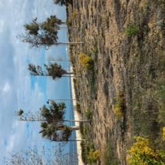 Foto 3 de 12 de la galería zenphone-2-muestras en Xataka