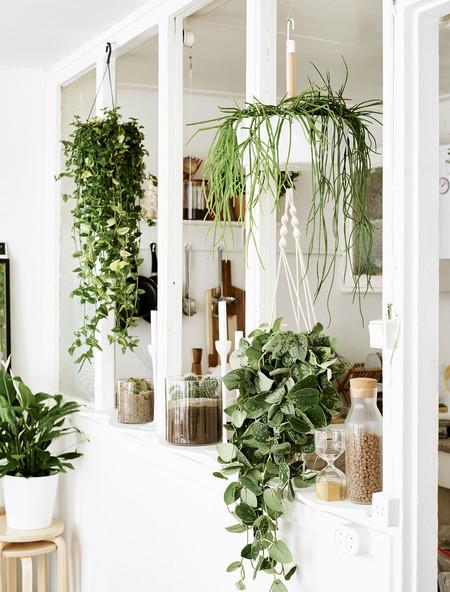Ikea Plantas 1